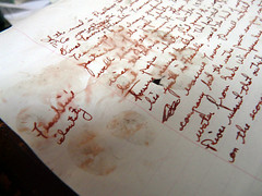 pawprint2