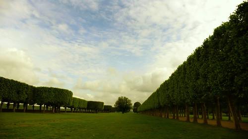 El árbol espontáneo del Observatoire de Meudon