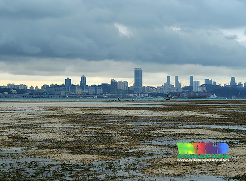 City skyline from Cyrene Reef