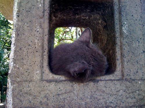 Macska alszik a kőlámpásban