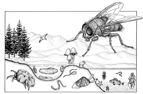Species-scape