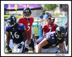 Joe Flacco (7086) (Donna G. Dow) Tags: sports football nfl quarterback joe baltimore ravens flacco