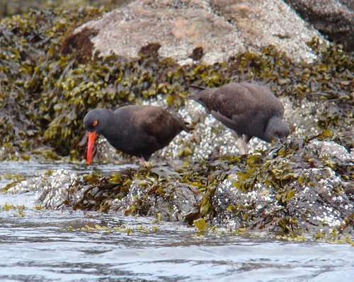 2008-08-10 Chatham Island 533