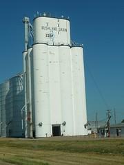 Bushland Grain (alist) Tags: move alist robison alicerobison ajrobison