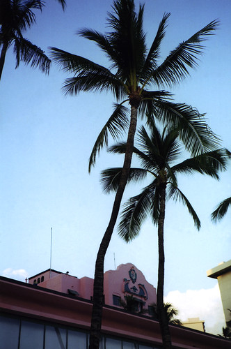 Paddock Café :: Pink Palace の前にある椰子の木