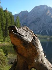 Il signore del lago (Teone!) Tags: wood italy sculpture lake strange lago italia braies altoadige legno scultura chicècè