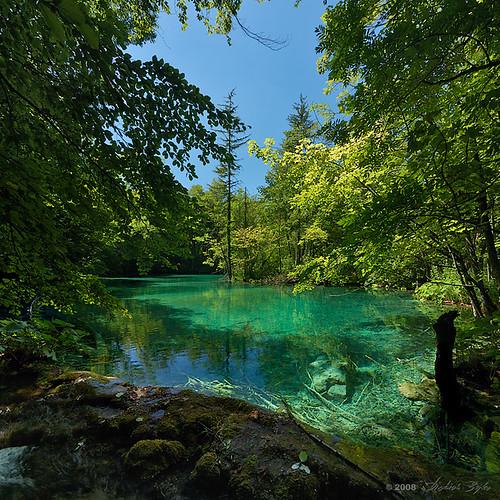 Naturaleza salvaje - Página 2 2859064048_fcf09cee43