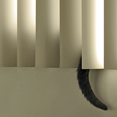 best seat in the house (MyArtistSoul) Tags: ca white window wall cat square pierre tail minimal blinds ventura canong6 bestofcats