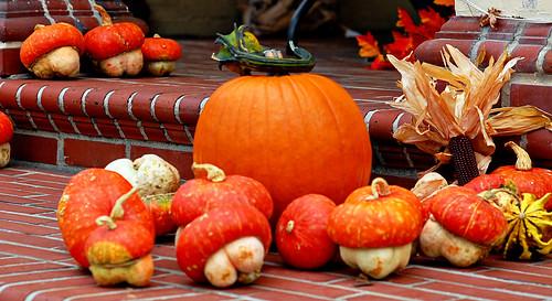 pumpkin & gordes