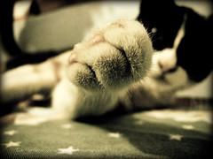 Dame esos cuatro!! (Eruиэ!!) Tags: como cat de se la casa y que un una gata pro es mascota con historia loca sus esta nos pero cuando pone locuras reimos erune matizanimal jodemos descamarao