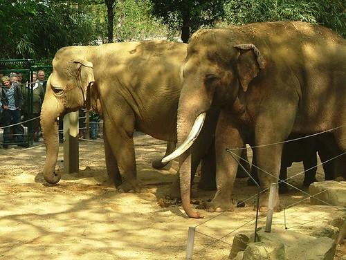 De familie - La famille par baby-elephant