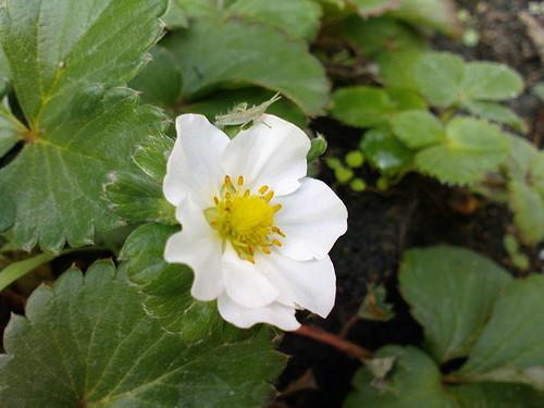 花 flower 蚱蜢