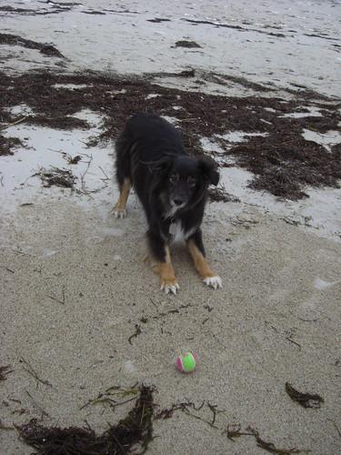 Ball, ball, frow the ball