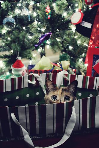 Christmas Eve [297/365]