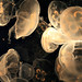 jellyfish image, photo or clip art