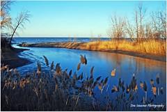 Old Woman Creek (at Lake Erie Shore) (View Large) (Don Iannone) Tags: nikon stream lakeerie wildlife ducks estuary greatblueheron naturepreserve baldeagles naturelovers barrierbeach huronohio abigfave ohiodepartmentofnaturalresources doniannone nikond80camera goldenheartaward freshwatermarshes nikond40xcamera swampforests uplandforest estuarinewaters nearshorelakeerie