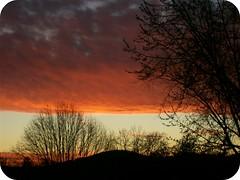 (chany.) Tags: world sunset orange tree window beautiful out photography pennsylvania pa awards picnik micartttt