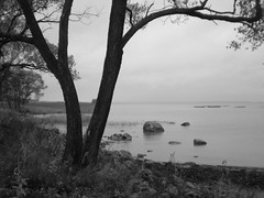 walking beside the Gulf of Finland (sftrajan) Tags: park autumn bw automne stpetersburg coast lluvia estate russia herbst herfst balticsea unescoworldheritagesite rainy otoo saintpetersburg  outono hst rusland gulfoffinland romanov podzim peterhof jesie  tsar petrodvorets sanpietroburgo russland sanktpetersburg  rosja pietari ryssland  sanpetersburgo venj efterr  rusko alexandriapark saintptersbourg venemaa  peterburi
