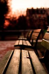 Alone (Bonnaf) Tags: wood brown paris france colors automne garden hiver bank banks banc feuille bancs
