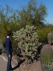 Allison Wants to Touch it but Resists (alist) Tags: phoenix garden botanical desert alicerobison