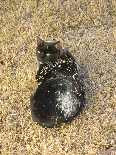 Mulch Cat