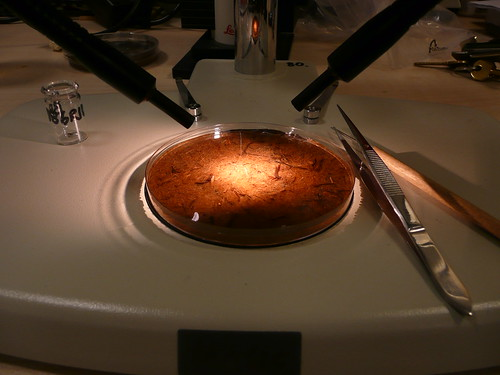 Accuracy of radiocarbon dating 7