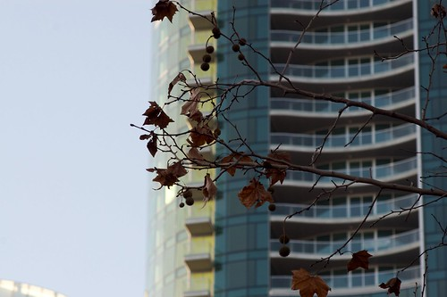 Leaves & Apartments