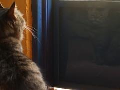El reflejo (Sonia Safa) Tags: azul cat puerta chat bigotes gato reflejo salida gata katze sonia gatto kater kedi pelo chatte safa gonza