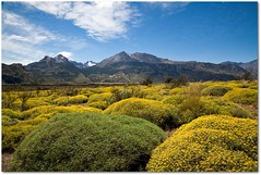 It is all yellow.... (Manon van der Lit) Tags: chile travel patagonia mountain southamerica yellow landscape chili patagonie zuidamerika cmwdyellow manonvanderlit