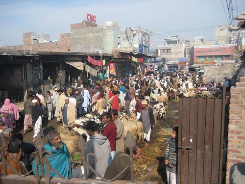 Goat Market/Bakra Mandi Lahore