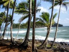 Ile du diable / Devil's Island (Y@w) Tags: ocean sea sky france tree water clouds contrast photoshop canon eos waves coconut guyana atlantic palmtrees topv kourou diable guyane photomatix bagne tonemapping 400d devilisland ledudiable yoh3d