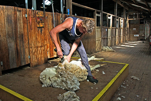 Hay, New South Wales, Australia, The Long Paddock, sheep shearer IMG_5805_Hay