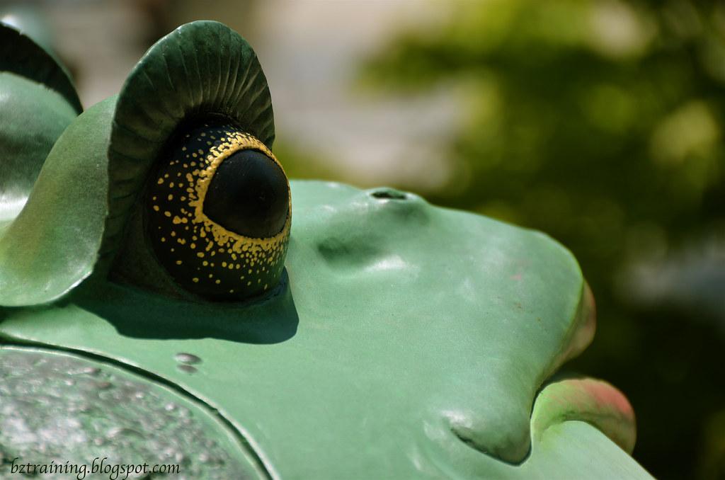 Frog Prince?