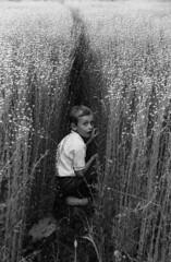 "Découvert! (Bernard Chevalier) Tags: nature fleurs champs surprise enfant garçon regard jeu enfance cachecache ""nikonflickraward"" ""flickraward"""