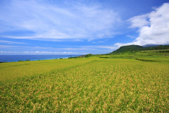 (nodie26) Tags: ocean blue sea water tour taiwan oceans  hualien      greeb             11