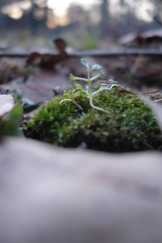 spots of GREEN