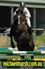 Berry_March_08 164 (michael_marsh_photos) Tags: horse berry poles equine showjumping showjump jumpclub berryjumpclub berryridingclub michaelmarsh michaelmarshphotos
