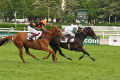 prix saint sauveur (32) (kanzebu) Tags: fence cheval ditch riviere rail steeple sang obstacle pur hurdle auteuil