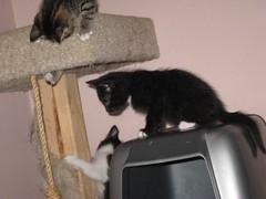11-24-07 467 (teribul_teri) Tags: cat play kittens cuties