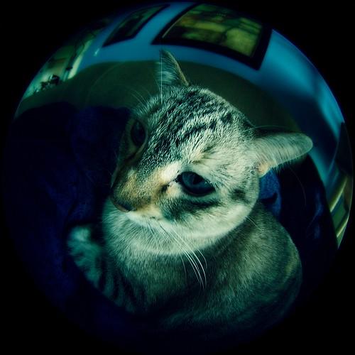 Fishy kitty