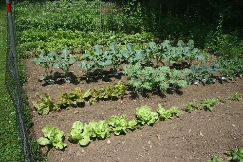 dad's garden 7