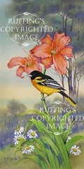 """Resting Place"" AER90 by A E Ruffing Oriole and Daylily"