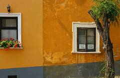 Rab Ráby's House (sonofsteppe) Tags: street new old flowers windows urban house detail building tree art wall square closed hungary exterior outdoor antique painted explore weathered locust colourful 60mm visual exploration past thewall prisoner peeled oldfashioned fragment renovated ilmuro bisected szentendre tér wallscape sonofsteppe pusztafia rabráby urbanlifeoftrees