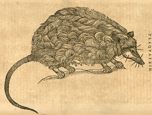 Manticatis Tlaquatzinis - Nieremberg (SICD)