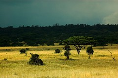 Nairobi National Park (MortenHpictures) Tags: kenya nairobi throughyoureyestoours