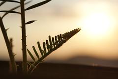 Besando al Sol / Kissing the sun (Roberto Anglés) Tags: my winnerstrophy allaboutsun