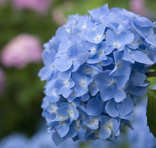 blue**