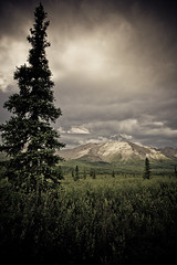 Don't Explain (code poet) Tags: sky mountain tree alaska clouds landscape willow denali spruce 28135mm denalinationalpark