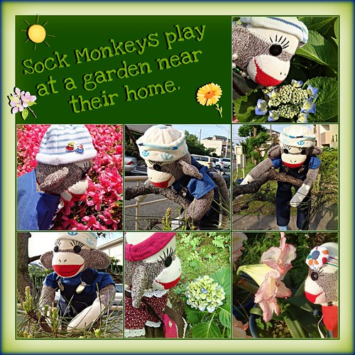 Sock Monkeys play at a garden near their home. (by martian cat)