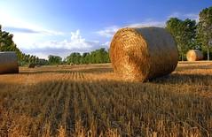 La mia terra (my land) (fabry ... ) Tags: italia lombardia lamiaterra supershot myland anawesomeshot betterthangood circolofotograficopaullese goldenvisions